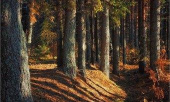 Шекснинцы попросили Путина озаботиться проблемой вывоза родного леса заграницу