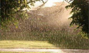 Вологодчина окажется под властью дождей наэтой неделе