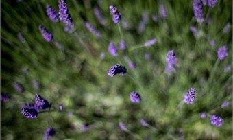 Собираем дикие травы инаслаждаемся шикарной погодой